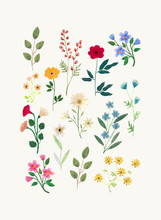 Botanical Illustration Painted With Gouache