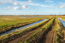 Polder Landscape With A Country Road Between Two Ditches