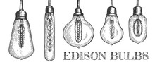 Collection Of Various Shaped Hanging Edison Bulbs