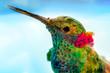 Leinwandbild Motiv hummingbird close-up portrait, macro feather detail