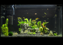 Beautiful Planted Tropical Fre...