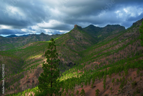 Foto op Plexiglas China Mountain valley covered with small green trees on Canary Islands