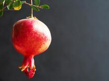 Ripening Pomegranate On A Branch On A Black.