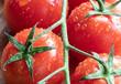 Cherry Tomato. Fresh. Drops. Vegetables. Macro. Wooden