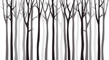 Birch Tree Wood Silhouette On White Background