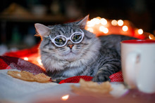 Lovely Fluffy Cat Relaxing On Soft Woolen Blanket. Gray Tabby Kitten With Big Eyes In Glasses With Cup Of Coffee Reading Book. Pets,  Seasons, Lifestyle, Cozy Autumn Weekend, Cold Weather Concept.