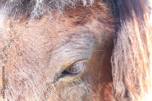 Canvas Prints Elephant Ranch horse feeding
