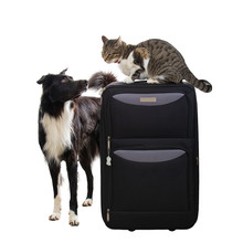 Cat And Dog Planning Vacation