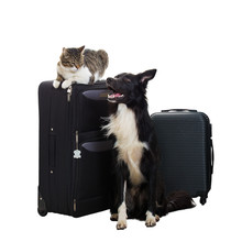 Cat And Dog Going On Trip
