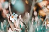 Vintage spring floral blurred background, natural first flowers primroses in grass - 256277372