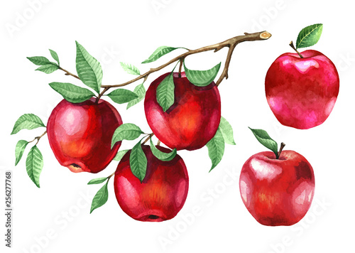 Fotografiet Watercolor red apples on a tree branch