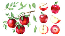A Large Collection Of Watercolor Red Apples.