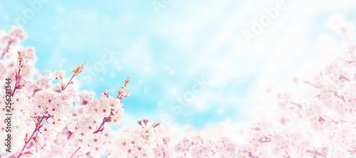 Sakura cherry tree pink spring flowers horizontal background Wallpaper Mural