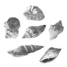 Set Of Seashells On White Background, Seashells In Pointillism Style, Vector Illustration