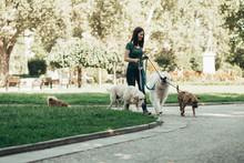 Dog Walker Enjoying With Dogs ...