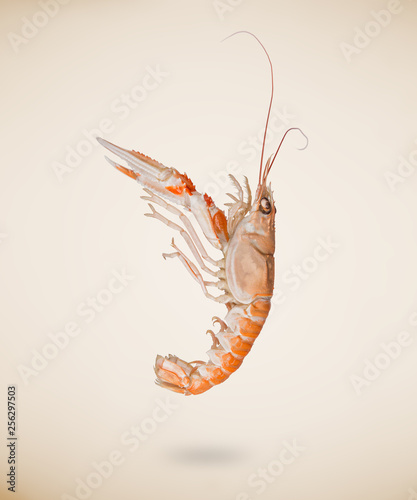 Photo  Back view of raw langoustine or scampi isolated on beige background