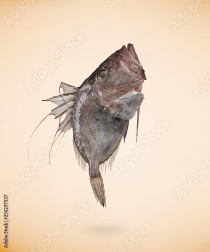 Photo  Zeus Faber (John Dory) fish, isolated on beige background