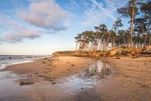 Germany, Mecklenburg-Western Pomerania, Darss, Ahrenshoop, West Beach, Uprooted Trees