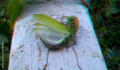 praying green mantis, 3D, anaglyph Canvas Print