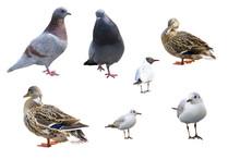 Set Of Bird