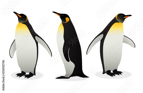 Photo Flock Of Emperor Penguins on white background