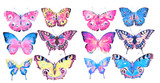 Fototapeta Motyle - beautiful color butterflies, set, watercolor,  isolated  on a white