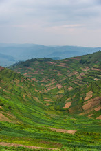 Africa, Uganda, Terraced Fields