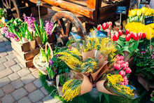 Flower Market. Spring Flowers In Boxes And Buckets Ready For Sale. Hyacinth, Mimosa And Tulips. Mother's Day Present