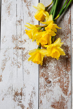 Bunch Of Yellow Daffodils On White, Wooden Background