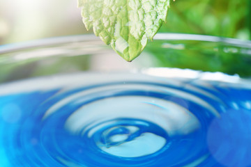 Beautiful green leaf with water drop on blue background, closeup. Space for text