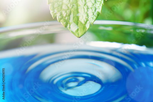 Obraz Beautiful green leaf with water drop on blue background, closeup. Space for text - fototapety do salonu