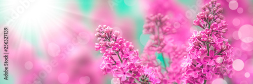 Foto op Plexiglas Lilac Pink Lilacs With Sunlight And Bokeh - Spring Background Banner