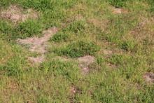 雑草が生えた土地