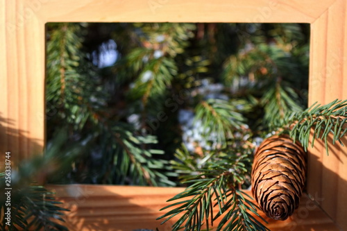 Fotografiet  spruce cone, needles and branch in wooden square frame on blurred background of green coniferous forest with snow in bright sunny day