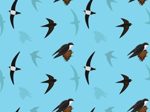 Bird Swift Wallpaper