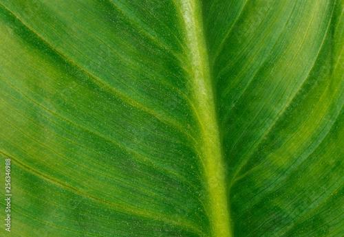 Fotografija  Foglia verde - particolare