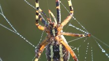 Fantastic View Of Spider On Sp...