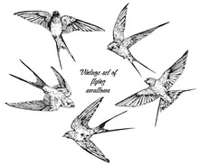 Hand Drawn Vector  Flying Swallows Vintage Set.