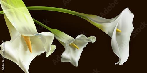 Fotografie, Obraz  realistic Kala flower