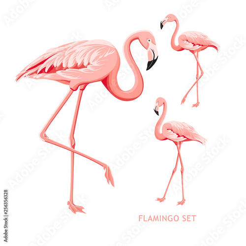 Keuken foto achterwand Flamingo Tropical birds collection. Pink flamingos set. Fashion summer print bundle. Elements for invitation card and your template design. Vector illustration.