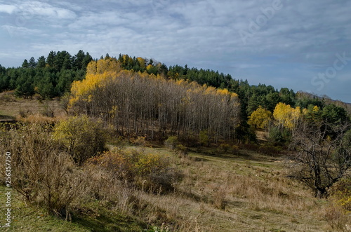 Photo  Amazing autumn view of glade, hill, forest with deciduous and coniferous trees a