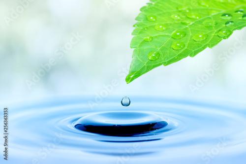 Kropla wody spadającej z zielonych liści
