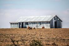 Corrugated Iron Hut At Midday