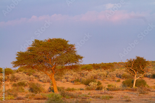 Aluminium Prints Africa namibia deserts and nature in national parks