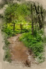 Watercolor Painting Of Beautiful Landscape Image Of Wooden Boardwalk Through Lush Green English Countryside Forest In Spring