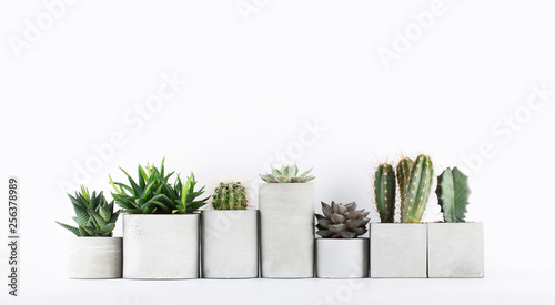Fototapeta Succulents and cactus in a concrete pots on a white bedside table obraz