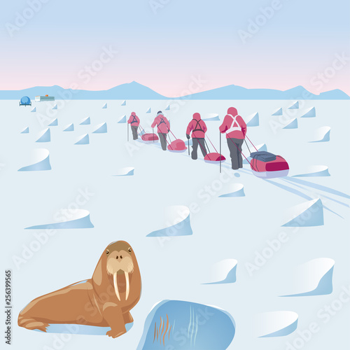 Expedition in the Arctic with walrus in the foreground Fototapeta