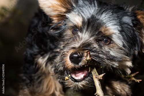 Foto Hund knabbert an Ast von Baum