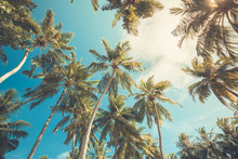 Green Palm Tree Against Blue Sky And White Clouds. Tropical Nature Background