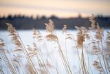Trzcina na wietrze w zimowym krajobrazie haiku. - 256412720